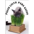 Pasto Listo Para Gatos En Maceta