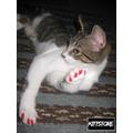 Fundas Para Uñas De Gato / Kittstore