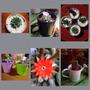 Arreglos En Cactus Y Suculentas