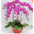 50 Semillas De Orquideas Mariposa Planta Casera