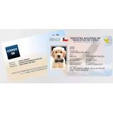 Plantillas Registro Carnet Mascotas Chile / 4 Versiones