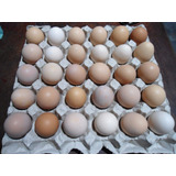 Huevos Fertiles De Gallinas Brahma