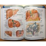 Atlas De Anatomia Netter 6 Edicion