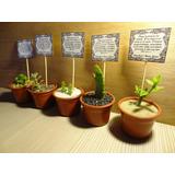 Cactus Encintados Plantas Para Bautizos Regalos Decorados