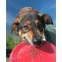 Frisbee Para Perros Pequeños
