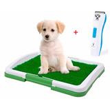 Baño Ecológico Perros + Cortapelo Para Mascotas Metinca