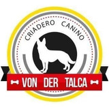 Cachorro Pastor Aleman Cria De Seleccion