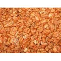 Pulga De Mar Roja Alimento Para Tortugas Y Koy