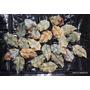 Hojas De Jade Para Hacer Colgante,piedra Natural