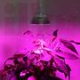 Lámpara Cultivo 27w Indoor 9leds Crecimiento Y Floración