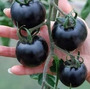 Semillas Tomate Negros Cherry Pack