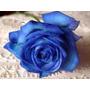 Semillas Rosas Azules Negras Verdes Moradas + Guia Cultivo