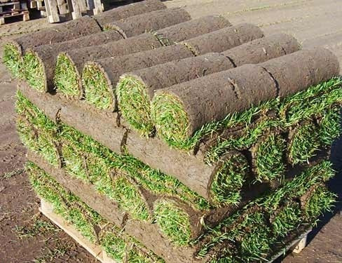 Pasto alfombra pasto en rollo venta e instalaci n for Cesped en rollo