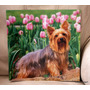 Foto Perrito Yorkshire Terrier