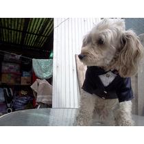 Smoking Y Vestidos De Fiesta Para Mascotas