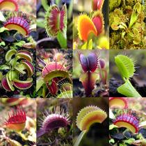 Semillas Plantas Carnivoras Venus Atrapamoscas Mix